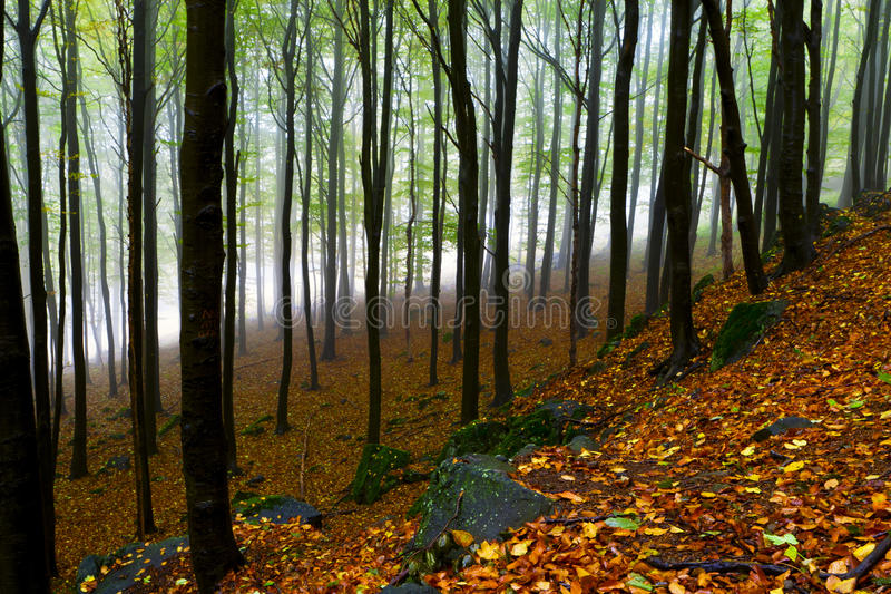 Mooi de herfstbos op de bergklippen. stock afbeeldingen