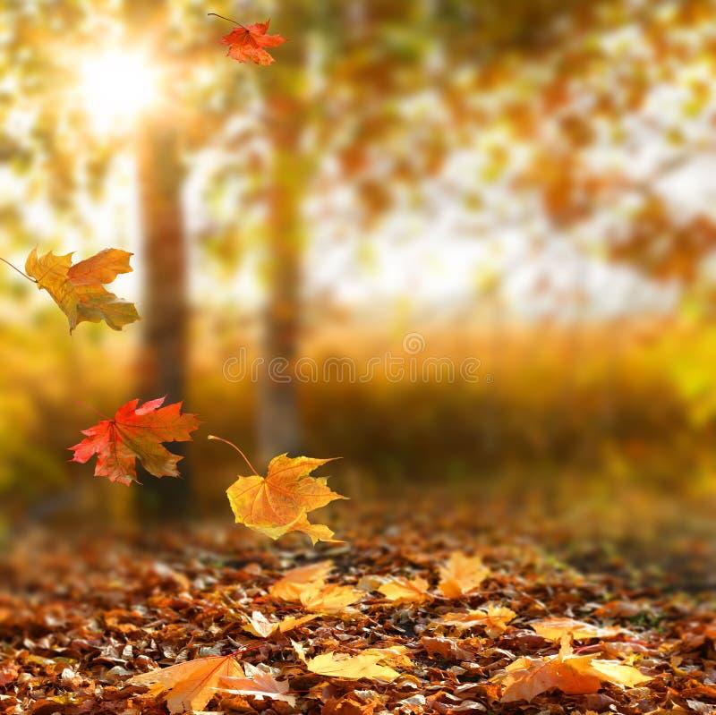 Mooi de herfstlandschap royalty-vrije stock foto's