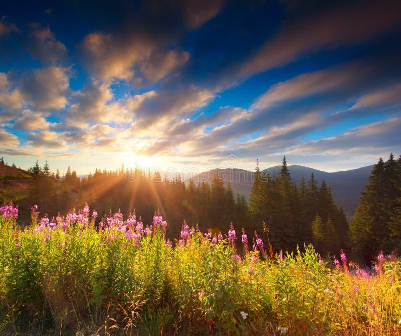 Mooi de herfstlandschap in de bergen met roze bloemen stock fotografie