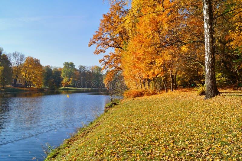Mooi de herfstlandschap De vijver in de herfst in stadspark stock foto's