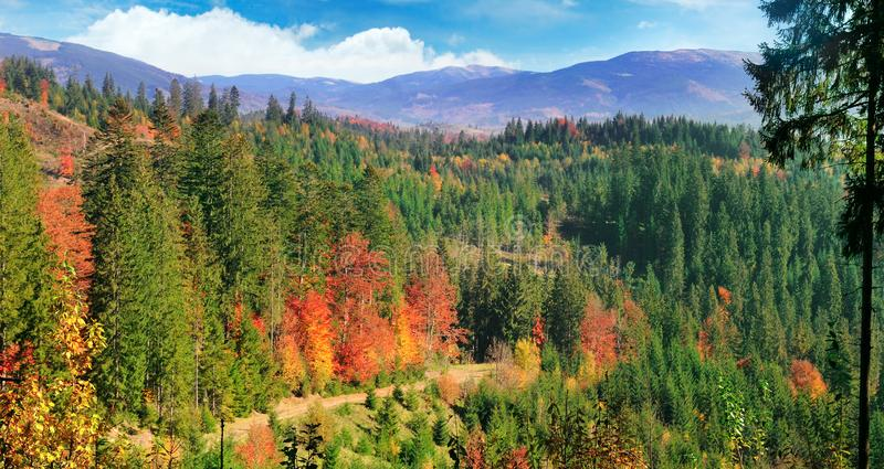 Mooi de herfstlandschap Heldere gele, groene en rode bladeren van bomen Brede foto royalty-vrije stock afbeeldingen