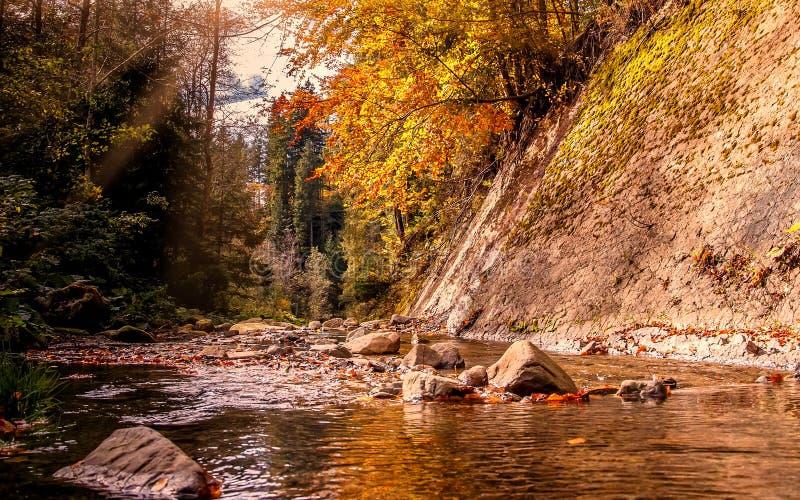 Mooi de herfstlandschap Kleine bergrivier in de herfst royalty-vrije stock foto