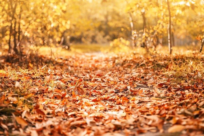 Mooi de herfstlandschap met bomen en droge bladeren stock foto