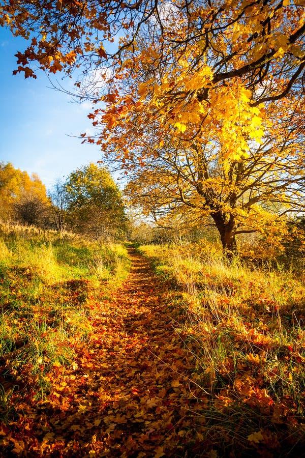 Mooi de herfstlandschap met lijn van bomen en en een weg in het park, royalty-vrije stock afbeeldingen