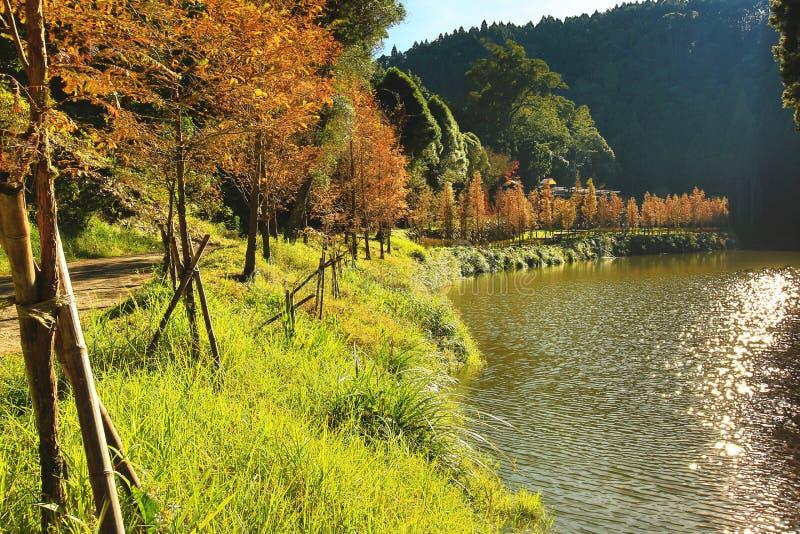 Mooi de herfstlandschap van de bomen van de dageraadcalifornische sequoia door de rivier royalty-vrije stock afbeelding