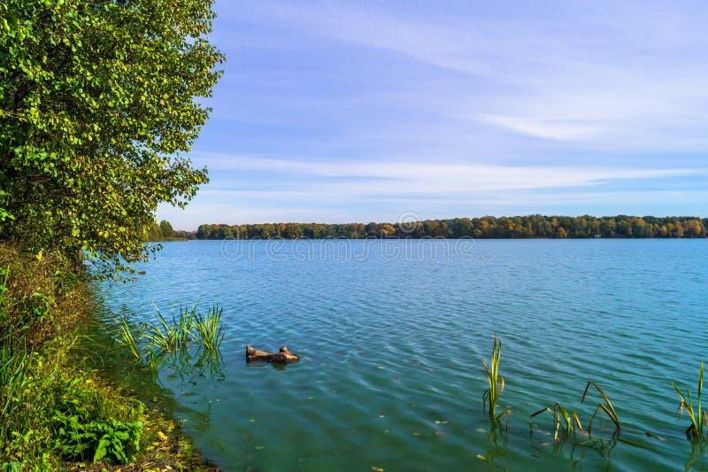 Mooi de herfstlandschap Weergeven van het oude ijzige die meer door bomen wordt omringd stock fotografie