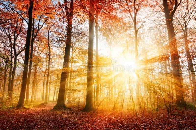 Mooi de herfstzonlicht in een bos stock fotografie