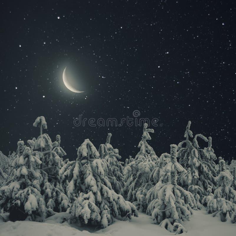 Mooi de nachtlandschap van de de winteraard Pijnboombomen behandelde sneeuw stock foto
