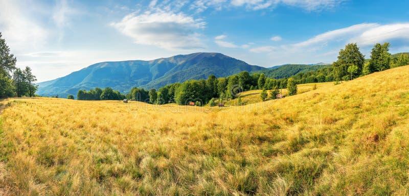 Mooi de recente zomerlandschap in bergen royalty-vrije stock foto's