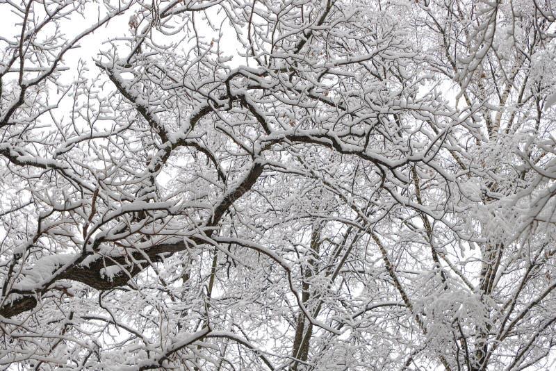 Mooi de winter boslandschap, bomen behandelde sneeuw royalty-vrije stock afbeeldingen