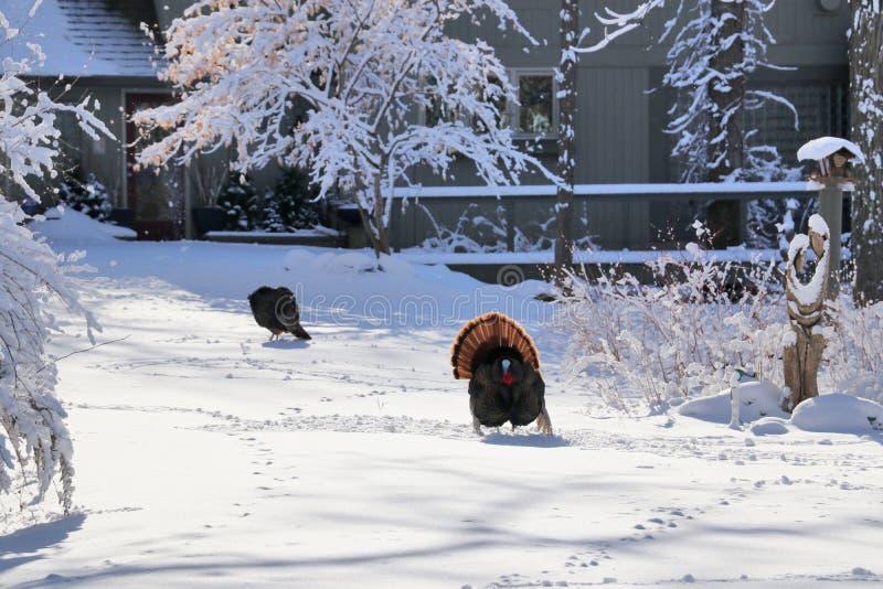 Mooi de winter landelijk landschap stock afbeelding