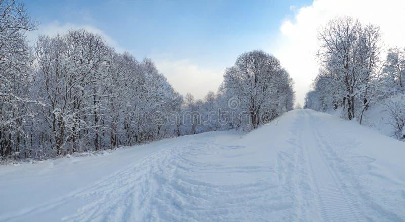 Mooi de winterbos dat met sneeuw wordt behandeld Skispoor in Tyso royalty-vrije stock afbeelding