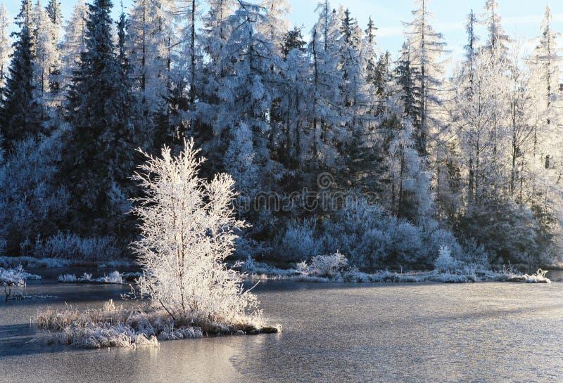Mooi de winterlandscape stock fotografie