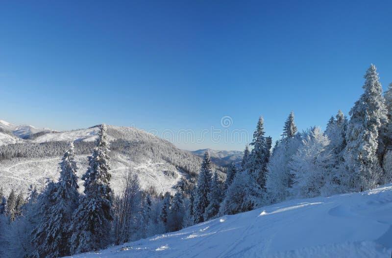 Mooi de winterlandscape Bomen en bergen met fre worden behandeld die royalty-vrije stock afbeelding