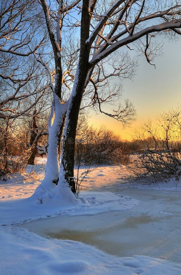 Mooi de winterlandschap stock foto