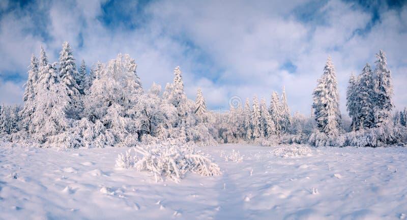 Mooi de winterlandschap in bergbos royalty-vrije stock afbeeldingen