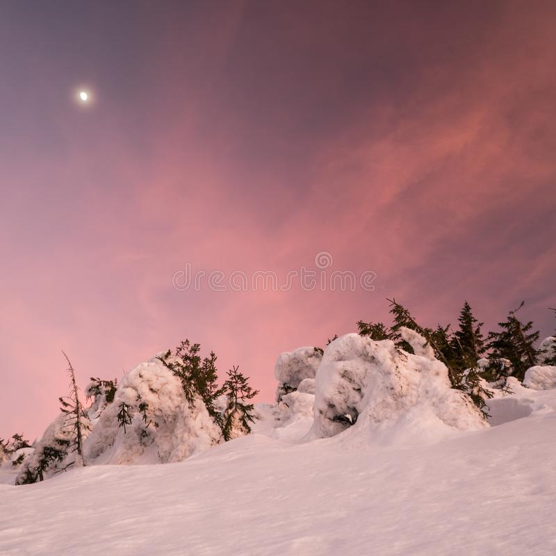 Mooi de winterlandschap in bergen op zonnige, heldere die dag, met bomen met reusachtige hoeveelheid sneeuw met verbazende vormen stock foto