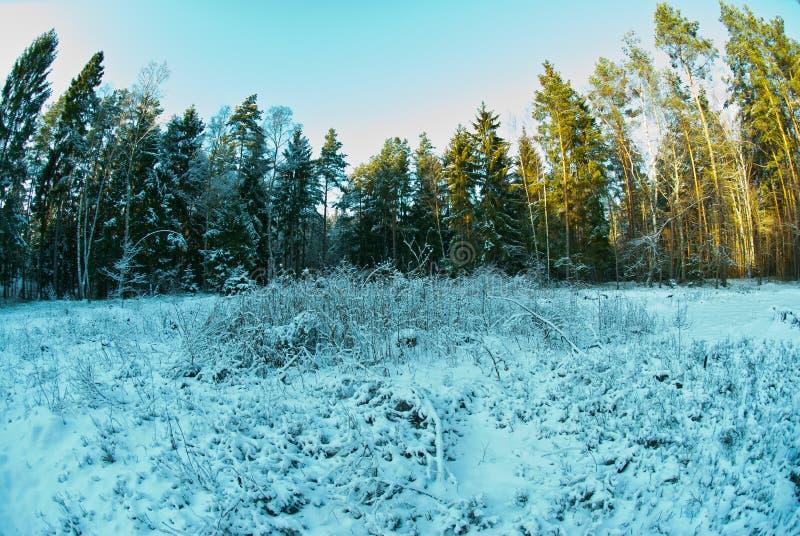 Mooi de winterlandschap in de zonnige dag stock foto's