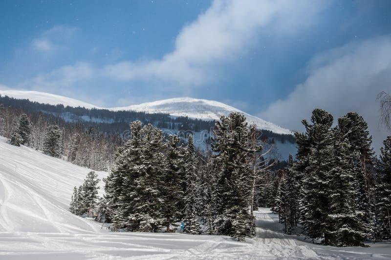 Mooi de winterlandschap in het bos royalty-vrije stock foto's