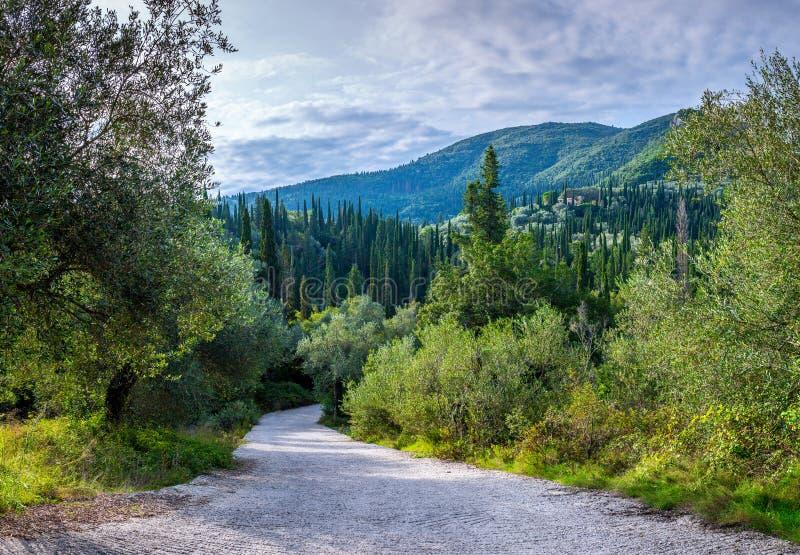 Mooi de zomer panoramisch landschap Cipresheuvels en groene berghellingen De weg die door het struikgewas van subtropisch gaan royalty-vrije stock foto's