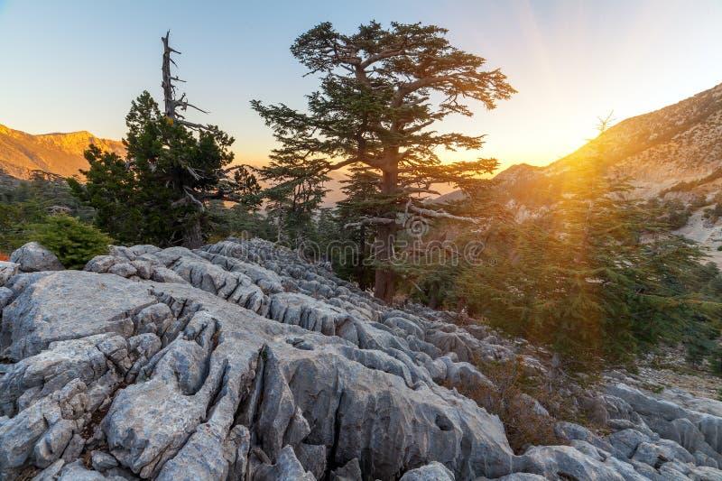 Mooi de zomerlandschap in de bergen District van Kemer, Antalya-Provincie, Turkije royalty-vrije stock fotografie