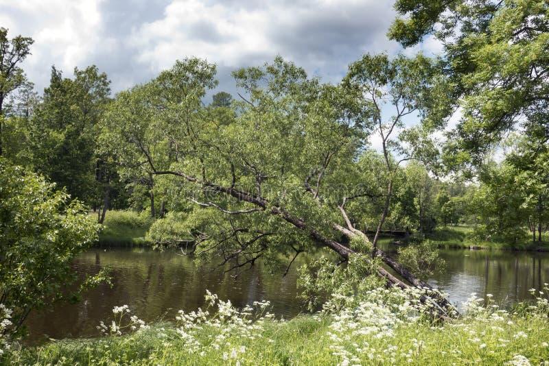 Mooi de zomerlandschap met bomen op de bank van het meer stock afbeelding