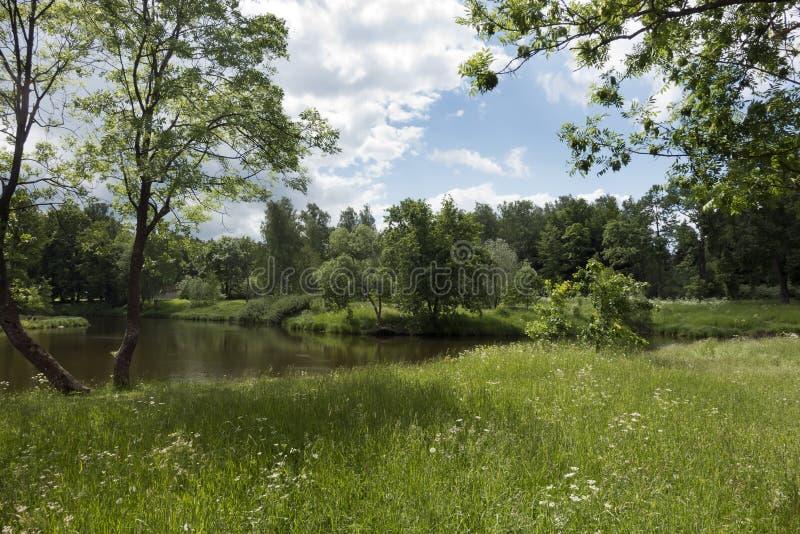Mooi de zomerlandschap met bomen op de bank van het meer, een weide en het hout op de achtergrond royalty-vrije stock foto's