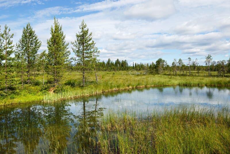 Mooi de zomerlandschap met bos, meer en moeras royalty-vrije stock afbeeldingen