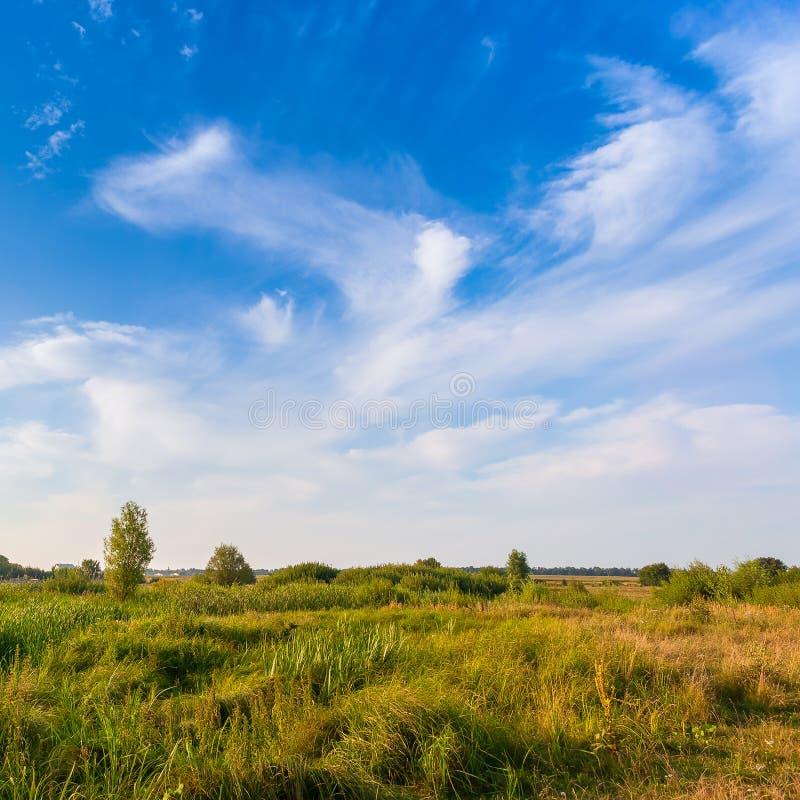 Download Mooi De Zomerlandschap Met Gebied Van Groen Gras Stock Foto - Afbeelding bestaande uit park, perfect: 54082286