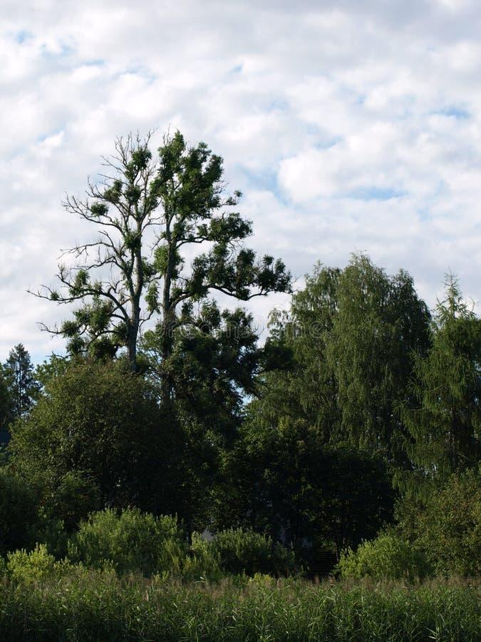 Mooi de zomerlandschap met kalm meer, bezinningen van verschillende bomen, stock foto's