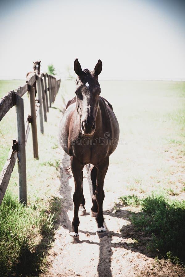 Mooi de zomerlandschap van het paardlandbouwbedrijf stock afbeeldingen