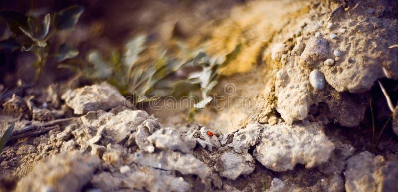 Mooi dicht omhooggaand zeven-vlek onzelieveheersbeestje op een menselijke hand, Coccinella-septempunctata die zijn voeten en het  royalty-vrije stock foto