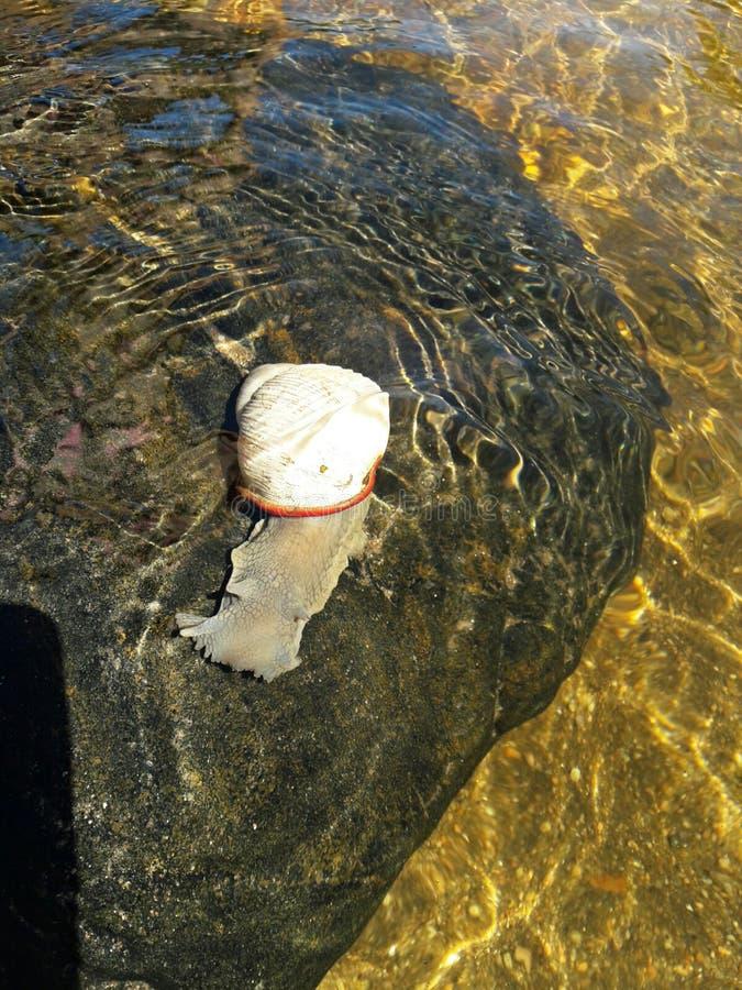 Mooi die rivierdier op een steen wordt neergestreken stock afbeelding