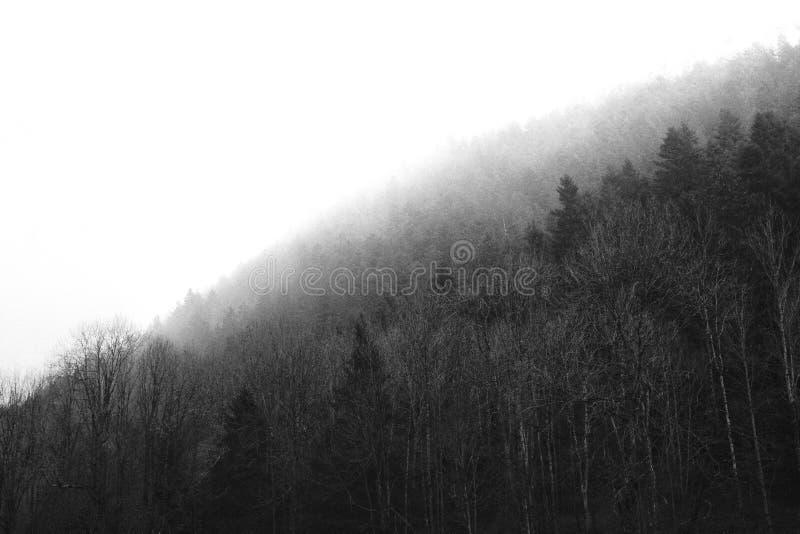 Mooi dik bos met duidelijke witte hemel stock fotografie