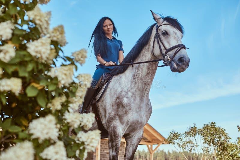 Mooi donkerbruin wijfje die een vlek grijs paard berijden dichtbij lilac struiken in tuin royalty-vrije stock afbeelding