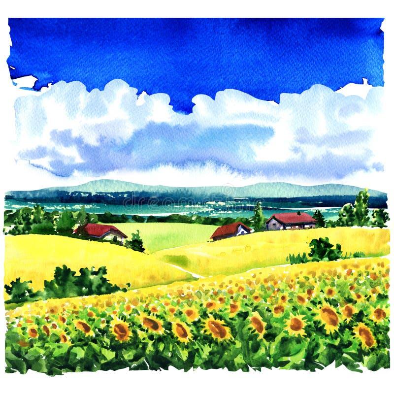 Mooi dorps landelijk landschap, zonnebloemgebied, weiden, buitenhuizen, blauwe hemel, wolken, waterverfillustratie stock afbeelding