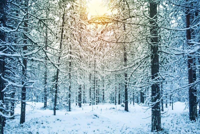 Mooi en dramatisch het landschapslandschap van de de winterzonsondergang met boom stock foto