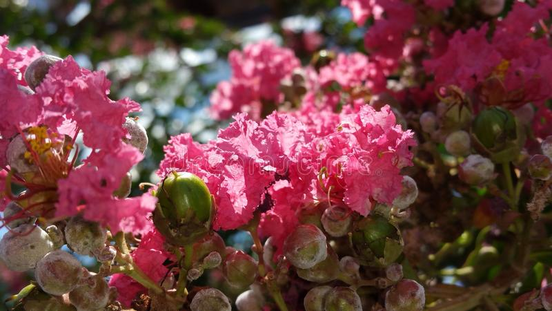 Mooi en Roze royalty-vrije stock fotografie