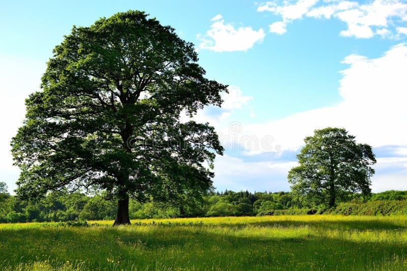 mooi Engels platteland in de zomer stock afbeeldingen