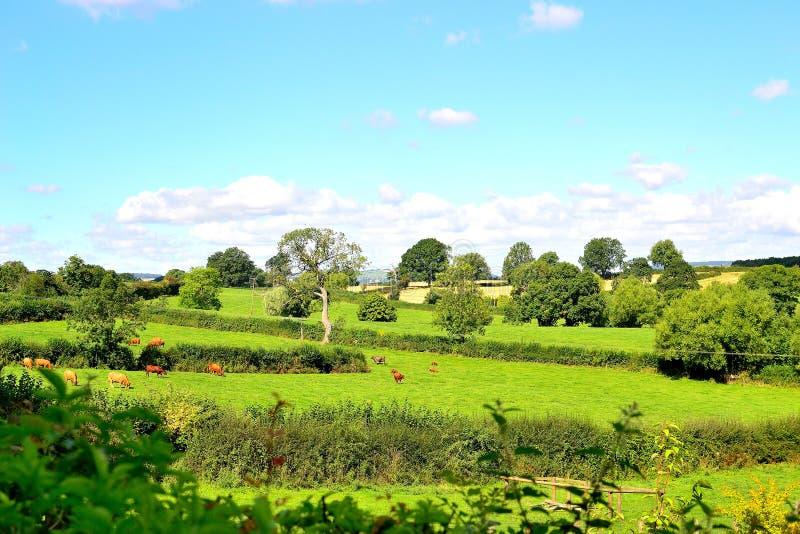 mooi Engels plattelandslandschap in de zomer dichtbij Ludlow in Engeland stock foto