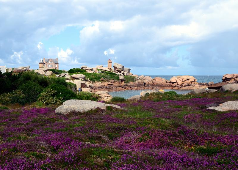 Mooi gebied van wilde bloemen met PHARE DE Ploumanac 'h officieel Gemiddeld Ruz Lighthouse bij de achtergrond stock afbeelding