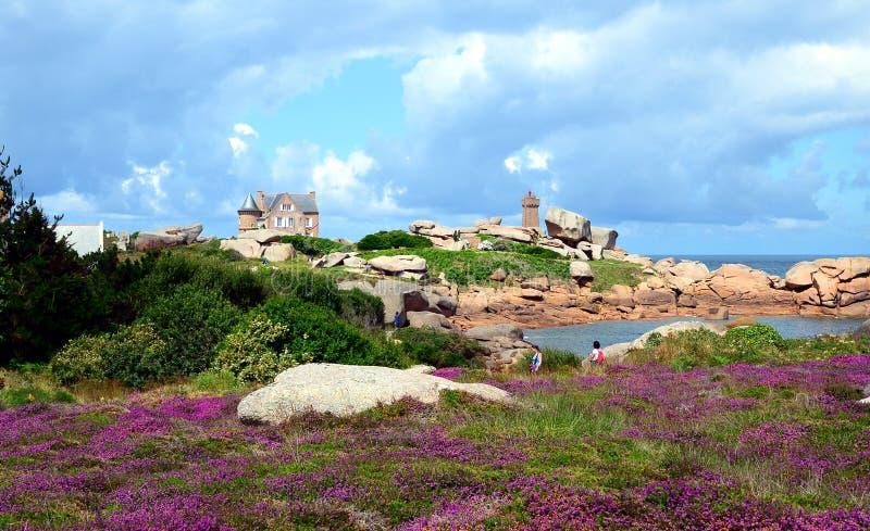 Mooi gebied van wilde bloemen met PHARE DE Ploumanac 'h officieel Gemiddeld Ruz Lighthouse bij de achtergrond royalty-vrije stock foto