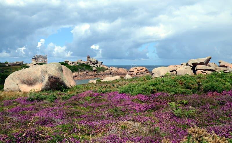 Mooi gebied van wilde bloemen met PHARE DE Ploumanac 'h officieel Gemiddeld Ruz Lighthouse bij de achtergrond stock foto