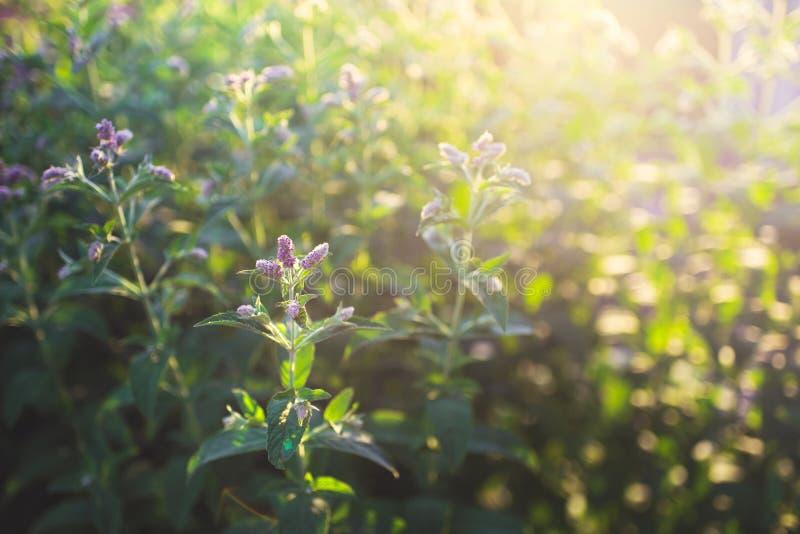 Mooi gebladerte bij zonsondergang in de zomer stock foto's