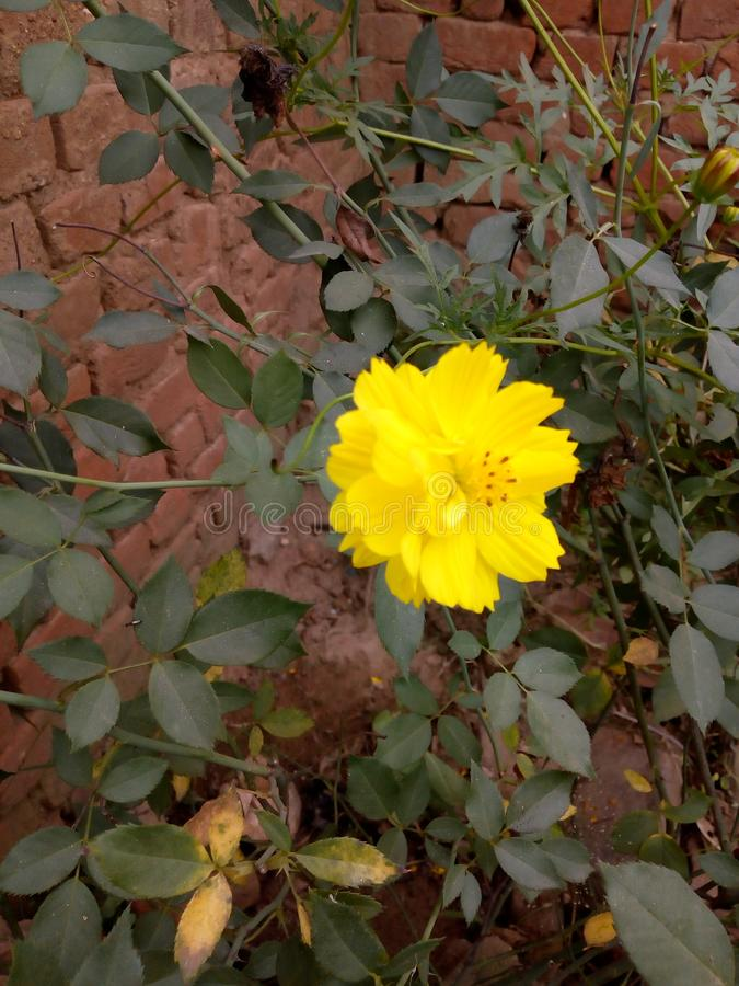 Mooi geel awosome bloembeeld, royalty-vrije stock fotografie