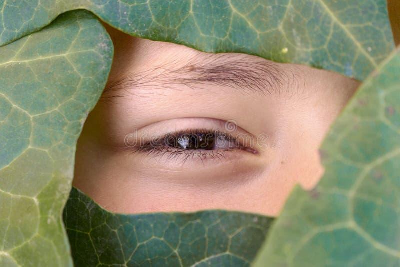 Mooi gezicht dat door de groene bladeren wordt behandeld stock fotografie