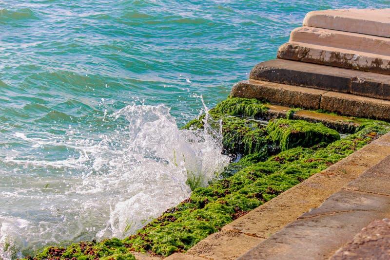 Mooi golven bespat zeewier op de treden stock foto's