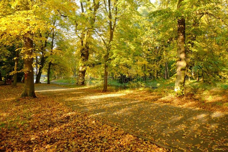 Mooi gouden de herfstbos stock foto