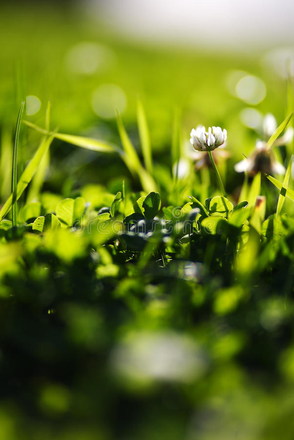 Mooi groen beeld royalty-vrije stock foto