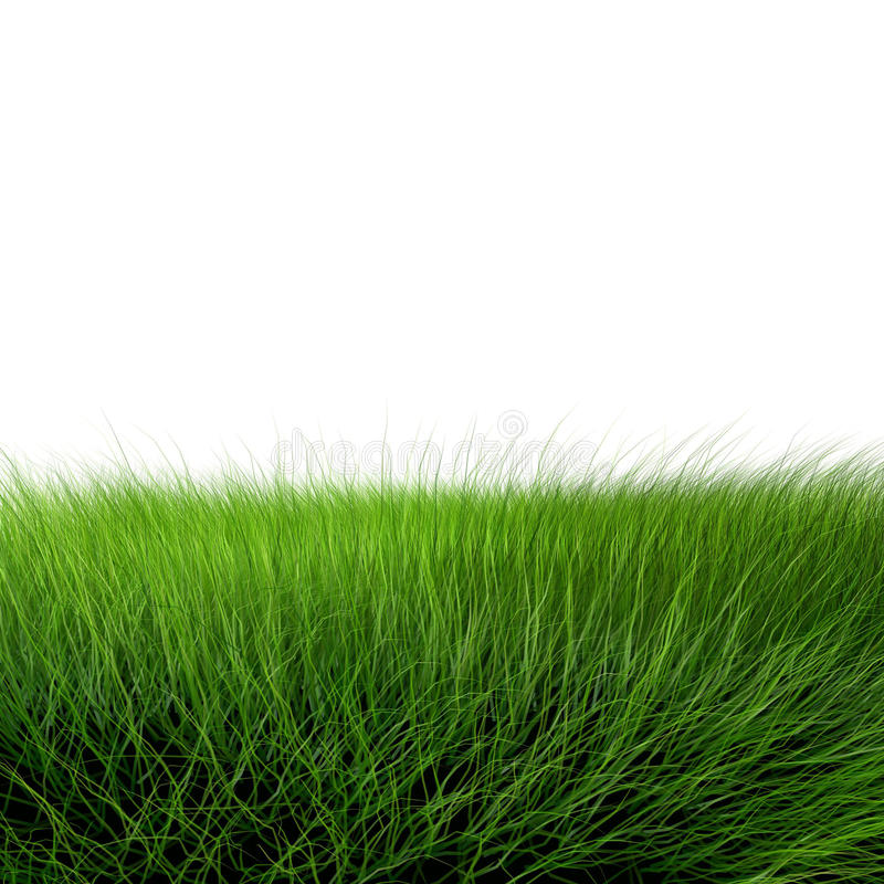 Mooi groen gras stock illustratie